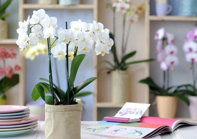 Вместо срезанных или засушенных цветов отдавайте предпочтение растениям в горшочке