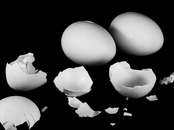 Вред яичной скорлупы