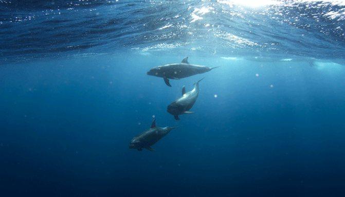 Все о дельфинах во сне - подробное толкование по 3 самым популярным сонникам