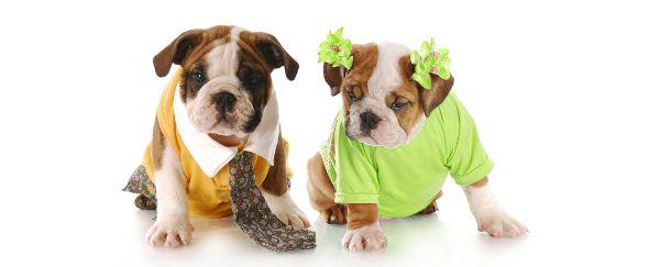 выбор собаки мальчик или девочка