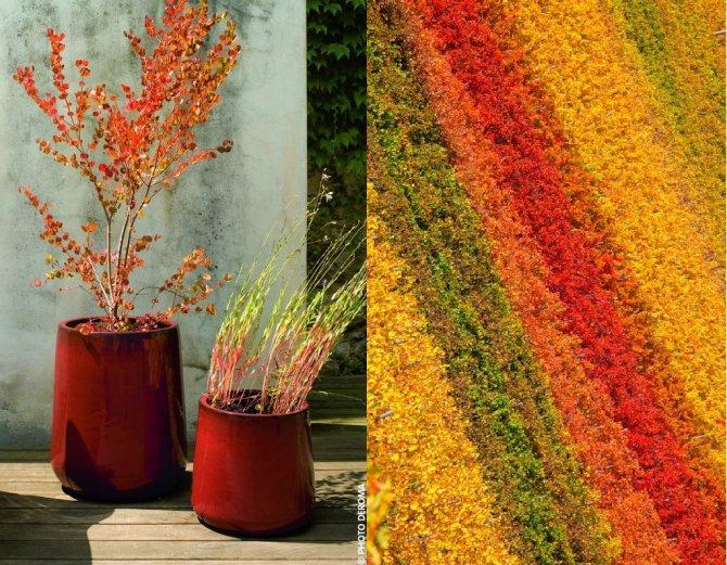 Яркие краски осени для интерьера и настроения.jpg