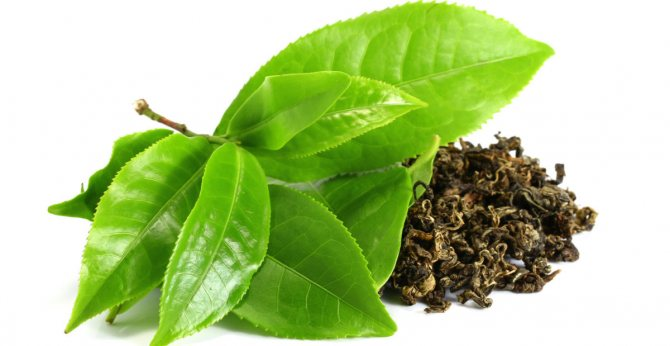 Зеленый чай поможет быть в отличной физической форме