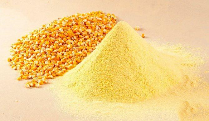 зерна кукурузы и кукурузная мука
