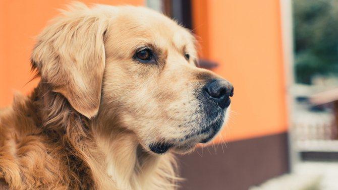 Значение у славян образ пса