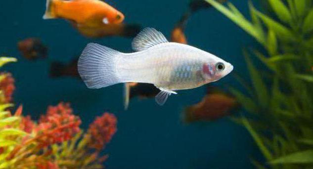 знак зодиака рыбы рыбы ребенок