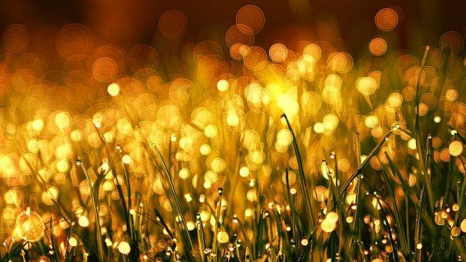 Золотой цвет: психология и значение